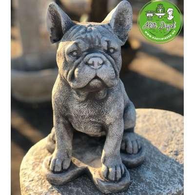 Mini francia bulldog